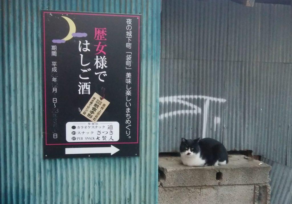 袋町のネコ
