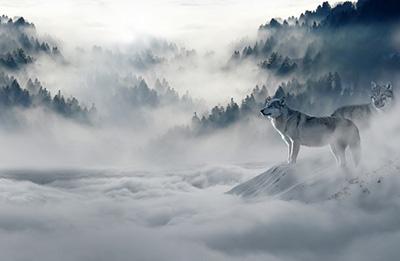 狼は人見知りの図