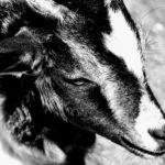 極上の鳥肌サウンドに酔いまくり!【唯一性SSミニマルリズムバンド】 「goat(jp)」に超ハマったので音楽コンセプトを解析してみる!