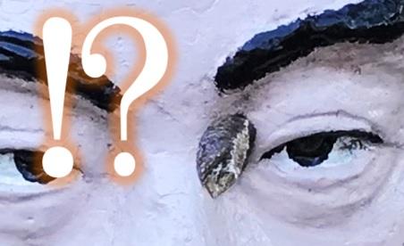 目に蟷螂の卵